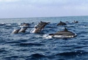 Lumba-lumbak Teluk Kiluan